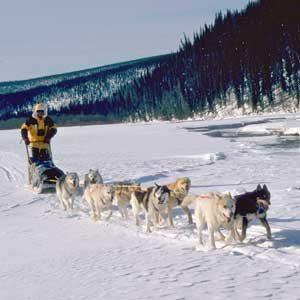 10. Husky Racing in Anchorage, Alaska