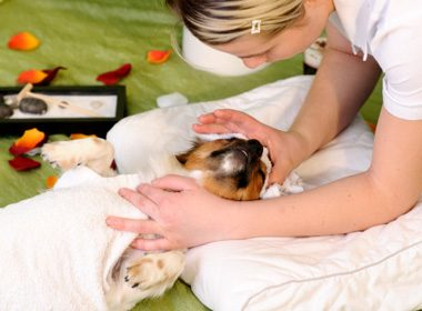 How to Give Your Dog a Massage