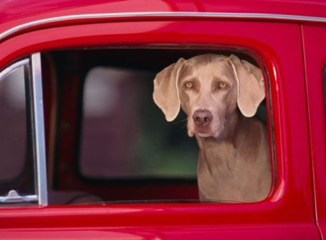 7 Car Safety Tips for Dogs