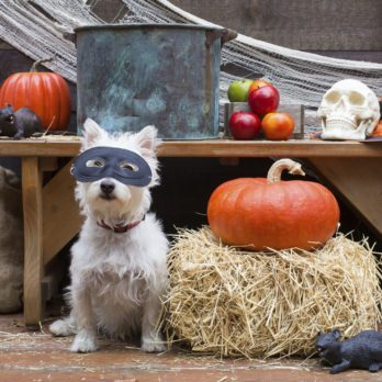 12 Hilarious Halloween Dog Costumes