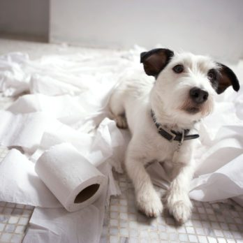 8 DIY Pet Cleanup Solutions
