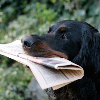 5 True Naughty Pet Stories