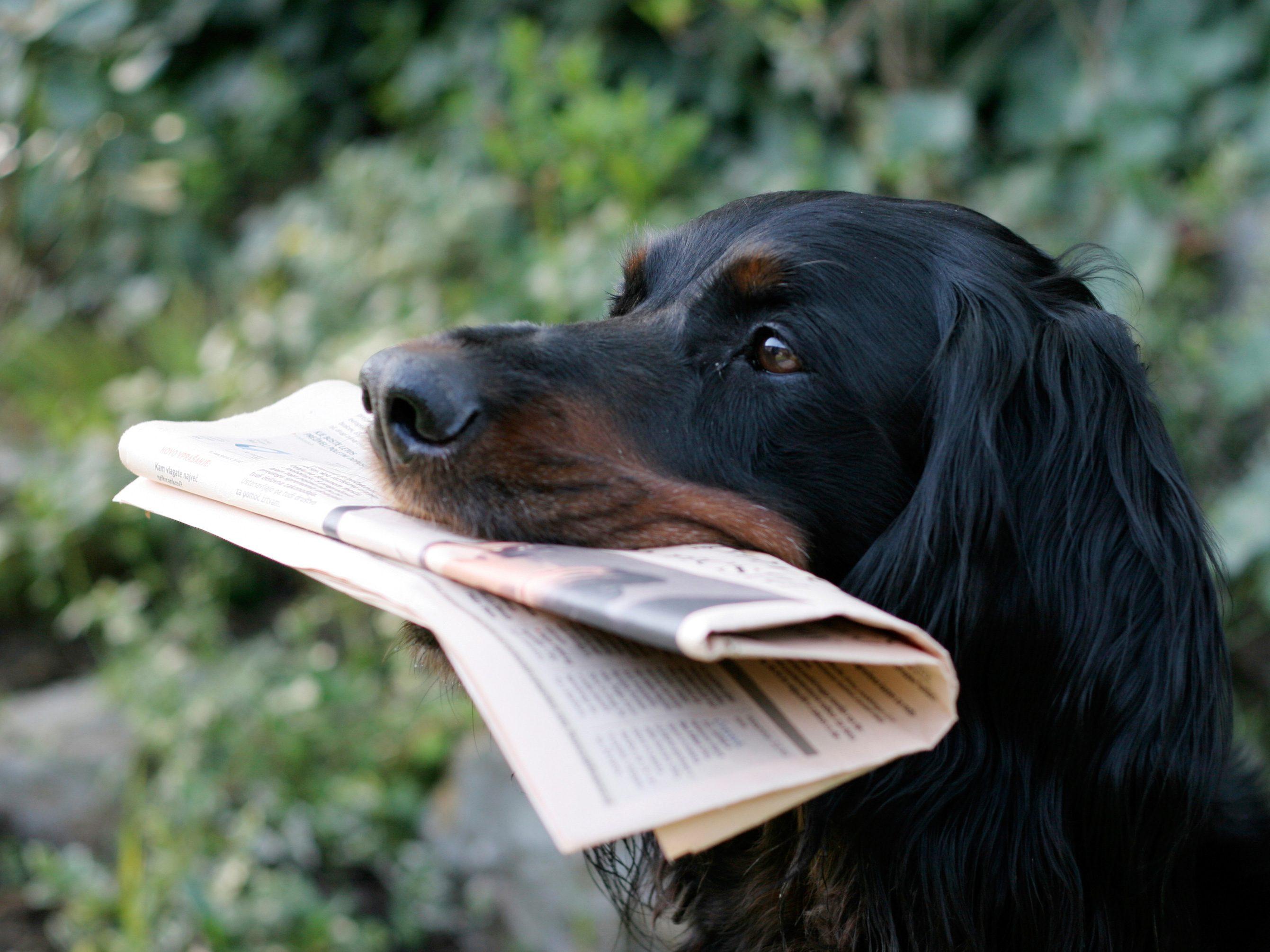 Diligent Dog