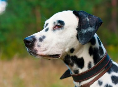 Things to Know About Dogs: Cracker Jack
