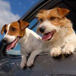 4 Essentials To Pack For Your Pet