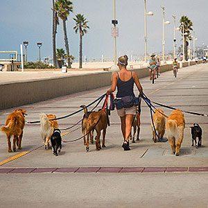 3. Keep an Eye on Their Walking