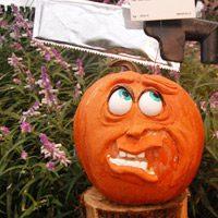 Disguise a Pumpkin Project: Please Don't Carve Me