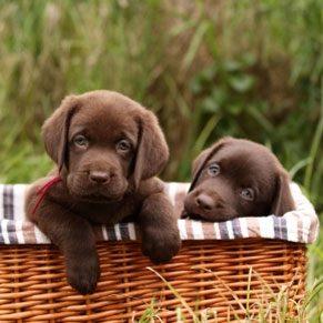 Pets Photo Gallery: Precious Puppies