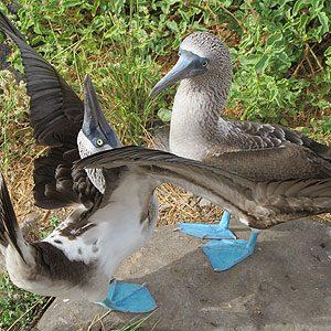 9. Galapagos Islands, Ecuador