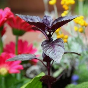 Edible Landscaping for Beginners