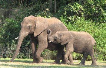 4. Elephant