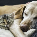 Essential Vaccinations for Your Dog and Cat