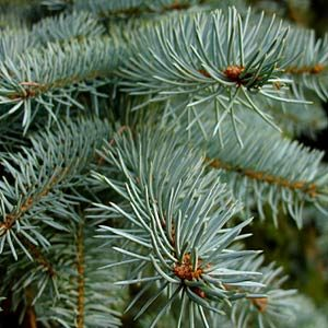 6. Protect Your Evergreens