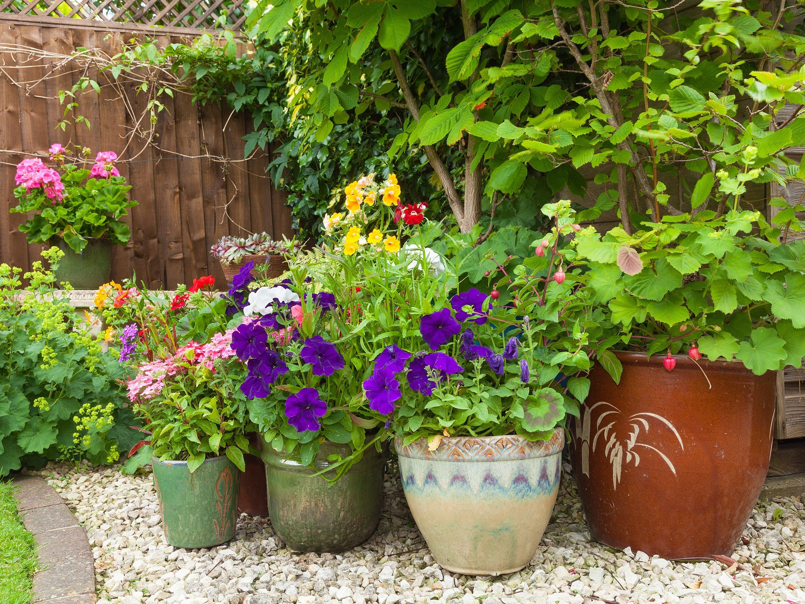 5. Grow a Container Garden