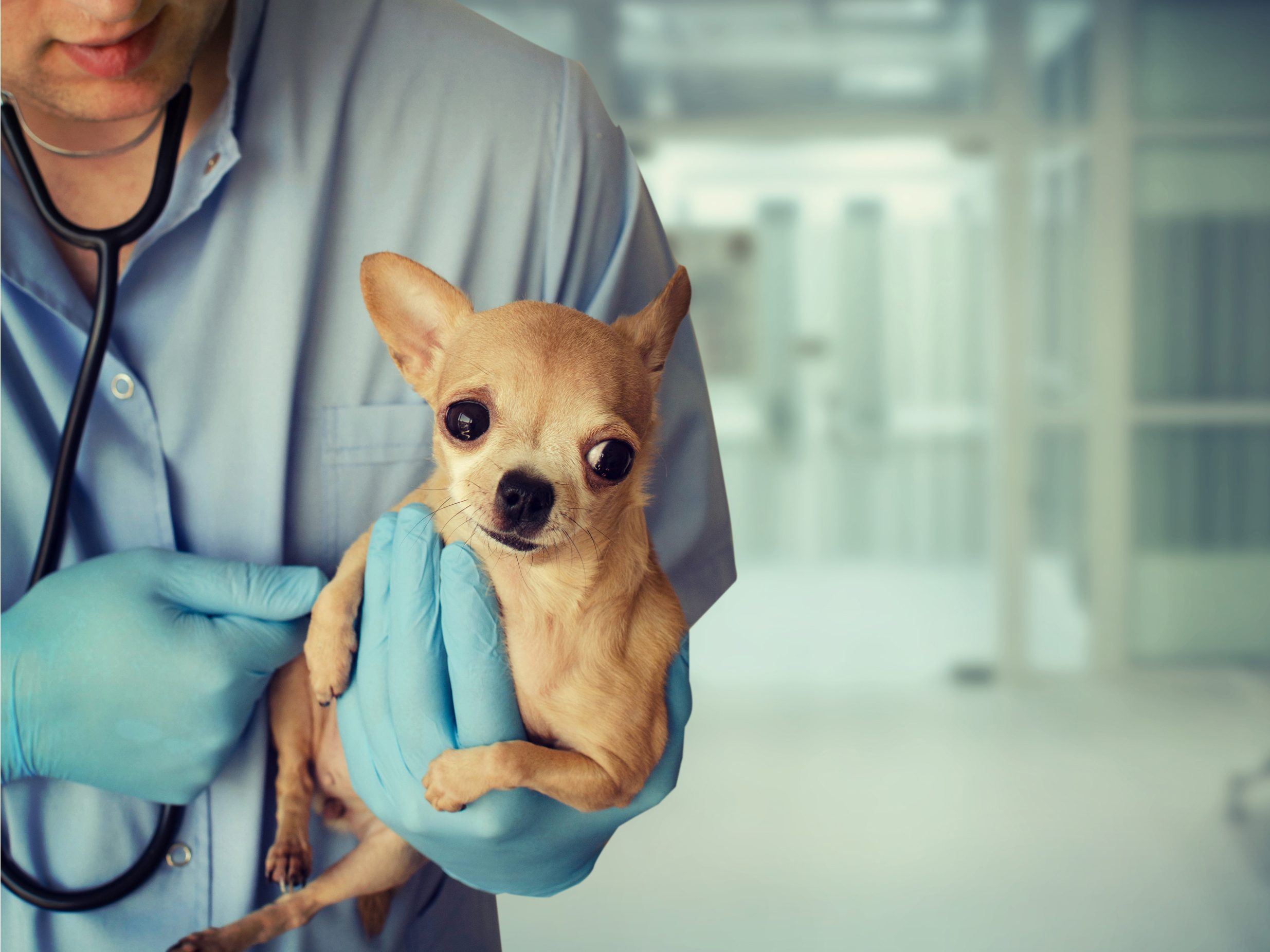 4. Find a good vet for your dog
