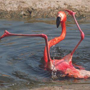 1. Pink Flamingo