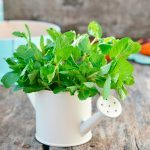 8 Wonderful Ways To Use Fresh Mint