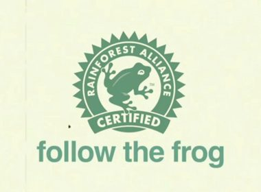Follow the Frog
