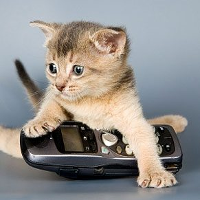 Best and Worst Pet Gadgets