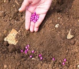 Top Tips for Garden Landscape Planning
