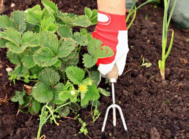 Stop Using Weed Killer on Your Garden