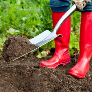 5 Steps to Starting a Vegetable Garden