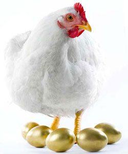 4. Millionaire Pets: Gigoo (Hen), $10 million