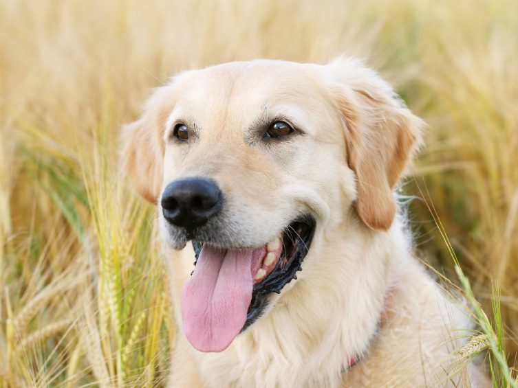 Crazy About Canadian Canines: Fido, Seizure-Response Dog