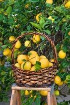 Got Lemons? Make Lemonade