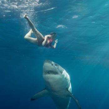 How to Survive a Shark Attack