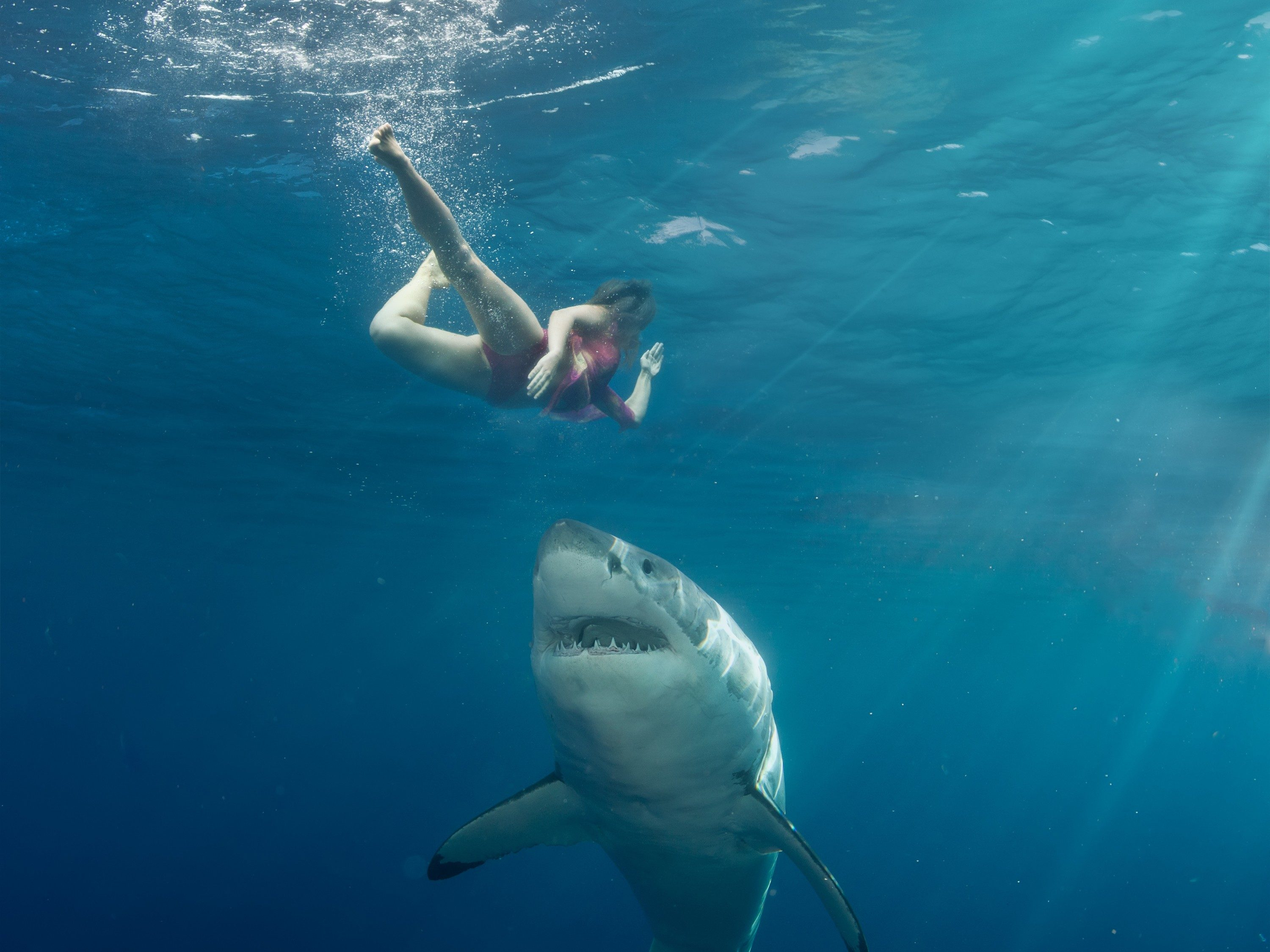 Shark Attacks Woman In Hawaii, Public Told To Stay Far Away - Travel Noire