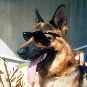 1. Millionaire Pets: Gunther IV (German Shepherd), $372 million