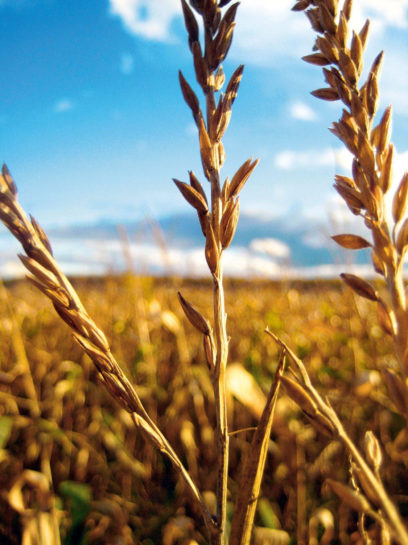 Harvest in Palmerston, Ont.