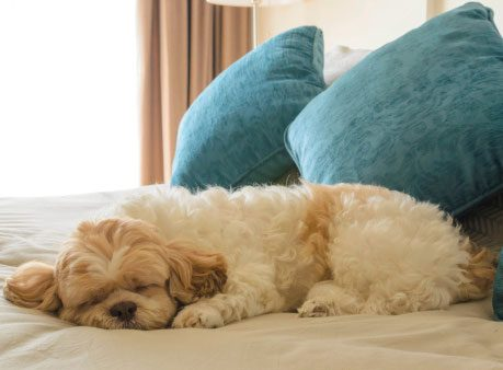 4 Tips for Travelling With Pets in Tow