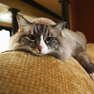 4. Cats Live Longer, Healthier Lives Indoors
