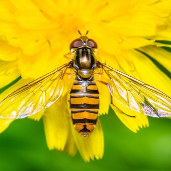 7 Insects You Actually Want In Your Garden