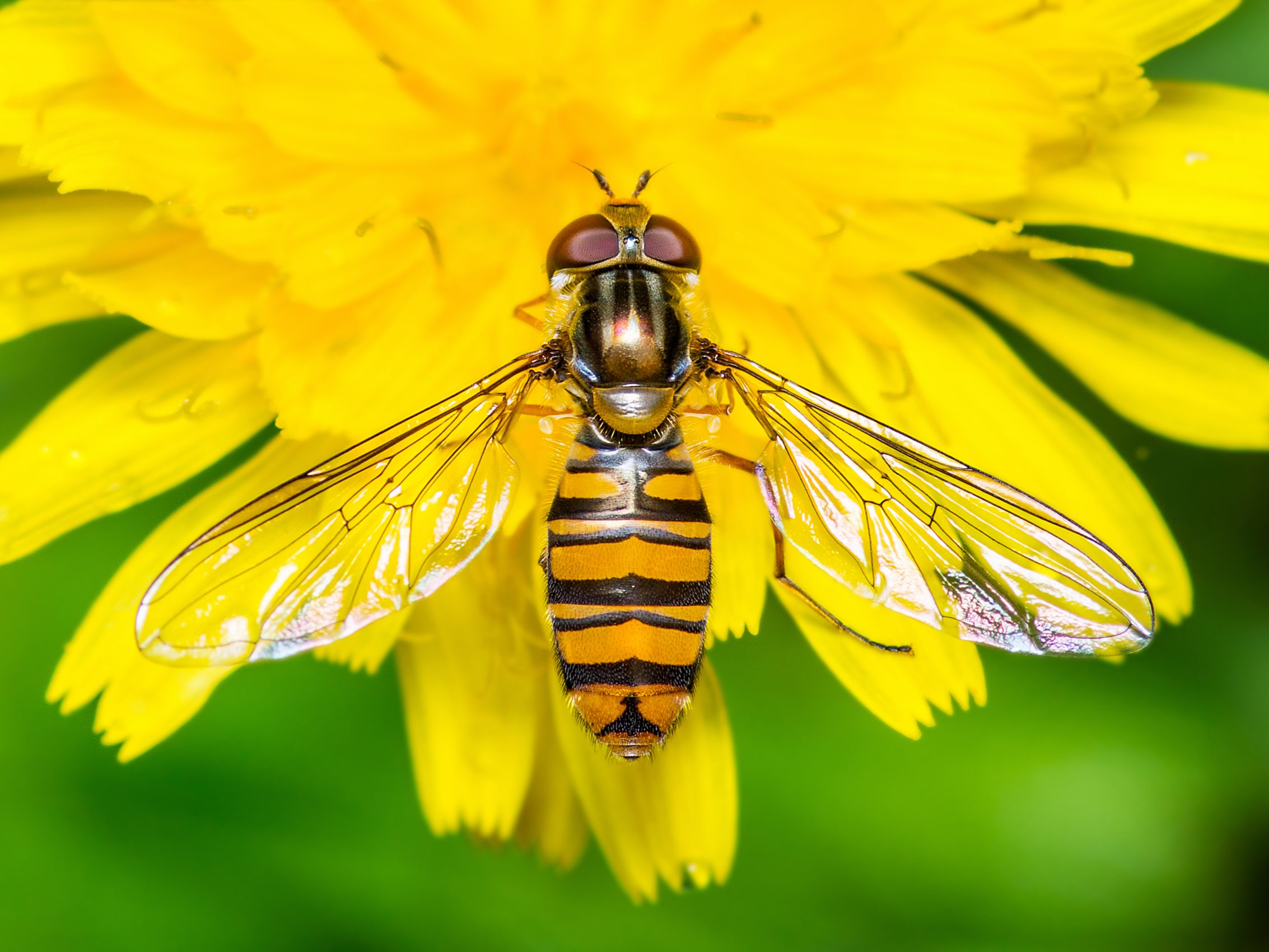 7 Good Garden Insects