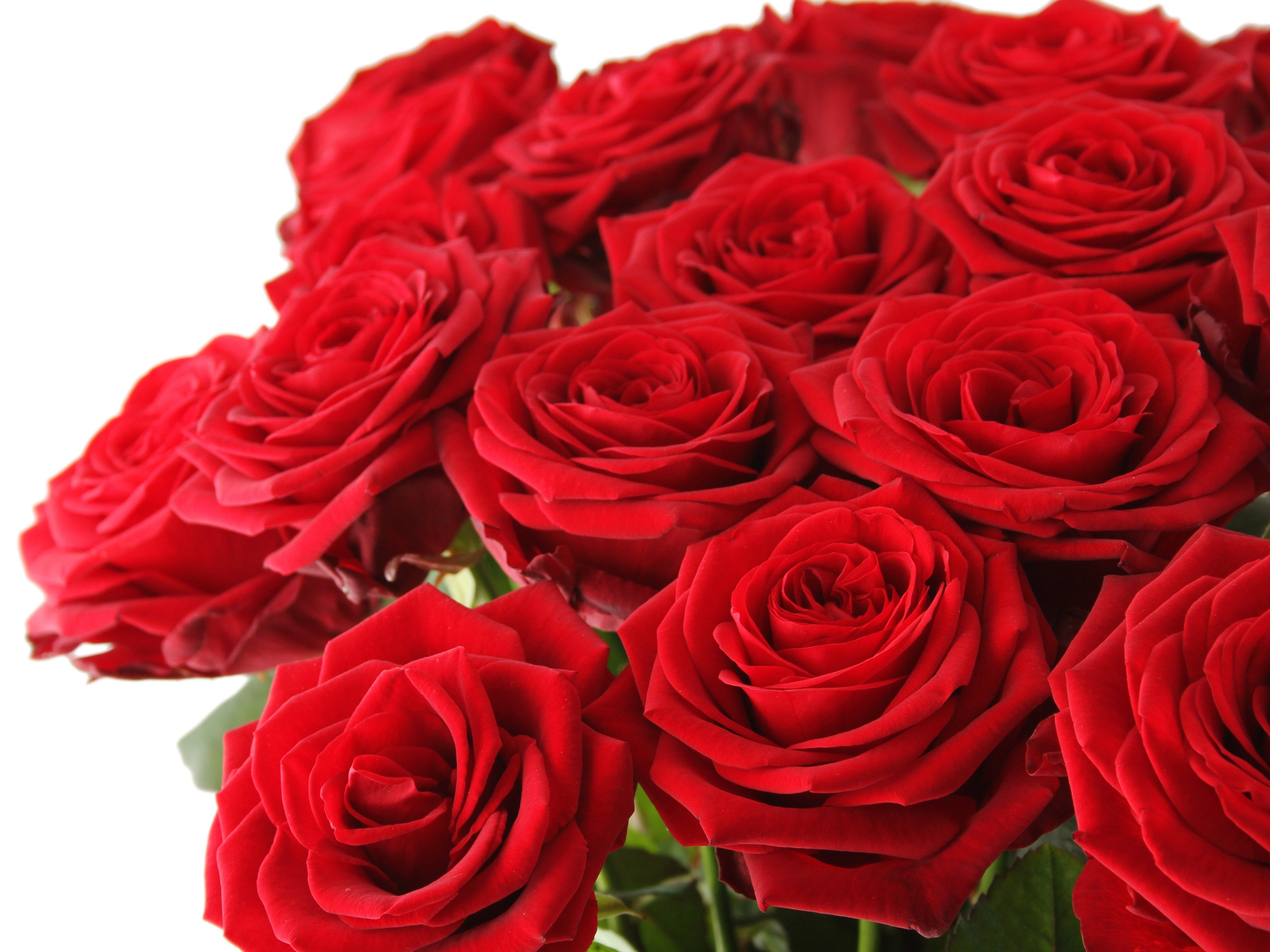 How to Pick the Right Flowers on Valentine's Day