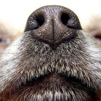 7 Ways to Stop Your Dog From Sniffing