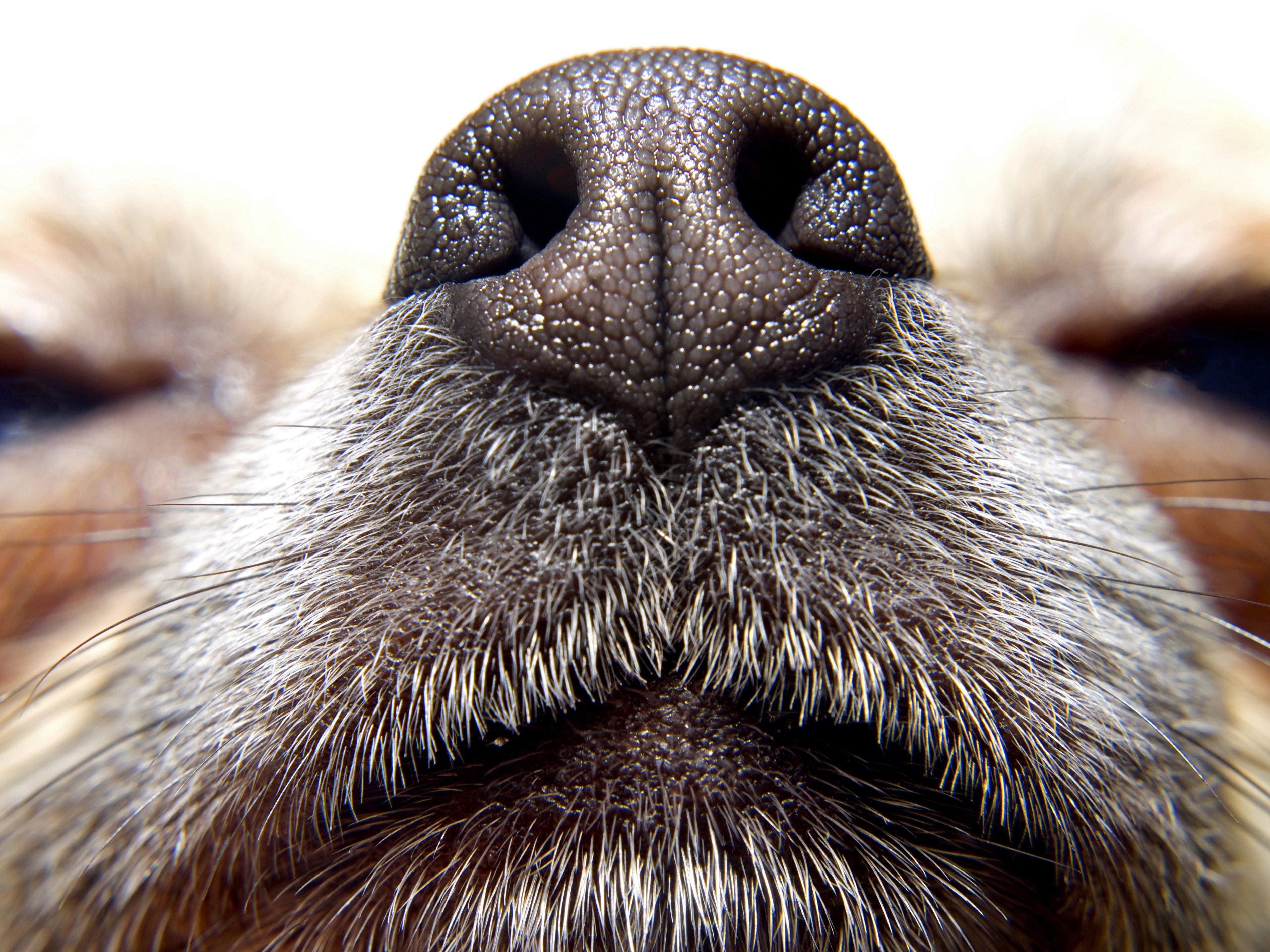 How to Stop Your Dog from Sniffing