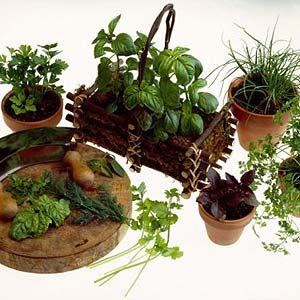 Indoor Veggie Garden How to start an indoor veggie garden create the right climate workwithnaturefo