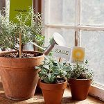 How to Start an Indoor Veggie Garden