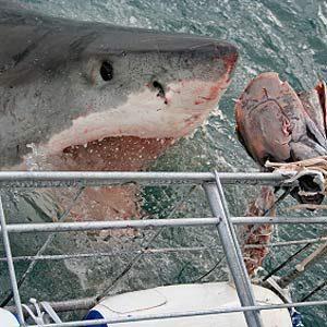 10. Most Treacherous Waters on Earth: Gansbaai, South Africa