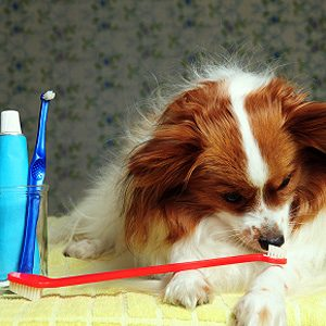 How to Have a Healthy Dog: Brush their Teeth Regularly