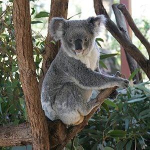 4. Taronga Zoo