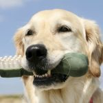 Ask the Expert: Dog's Oral Fixation Dangerous?