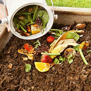 Start a Compost Pile