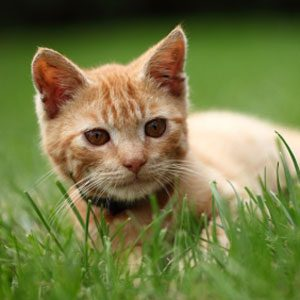 What Ginger Fur Says About Your Cat