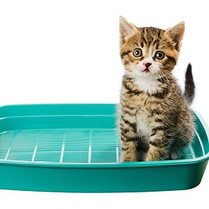 Problem: Your Cat Avoids the Litter Box