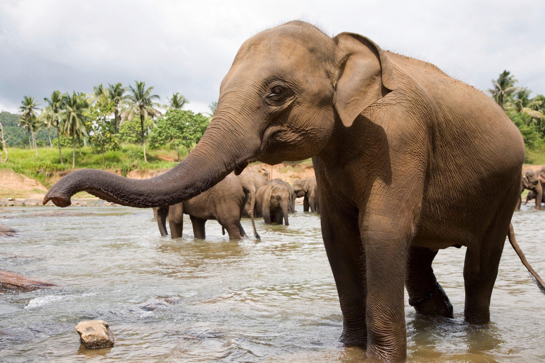 4. Female Elephants Lead the Pack